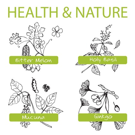 Handdrawn Set - Health and Nature. Collection of Medicine Herbs.  Natural Supplements. Bitter melon, Holy Basil, Mucuna, Ginkgo Vector