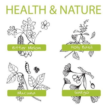 bitter: Handdrawn Set - Health and Nature. Collection of Medicine Herbs.  Natural Supplements. Bitter melon, Holy Basil, Mucuna, Ginkgo