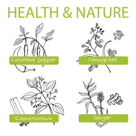 Handdrawn Set - Health and Nature. Collection of Medicine Herbs. Natural Supplements. Cayenne pepper, Fenugreek, Cinnamomum, Ginger Vector