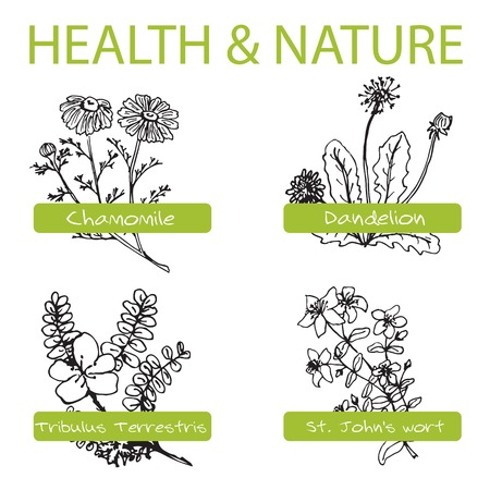 wort: Handdrawn Set - Health and Nature. Collection of Medicine Herbs.  Natural Supplements. Dandelion, Chamomile, St Johns wort, Tribulus Terrestris