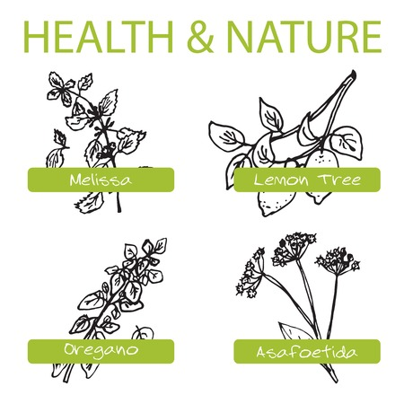 Handdrawn Set - Health and Nature. Collection of Medicine Herbs. Natural Supplements. Oregano, Lemon Tree, Melissa, Asafoetida Vector