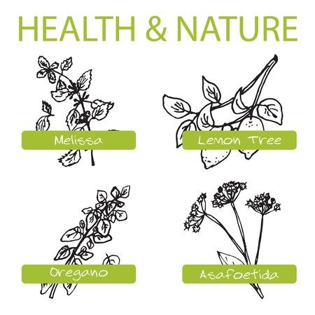 Handdrawn Set - Health and Nature. Collection of Medicine Herbs. Natural Supplements. Oregano, Lemon Tree, Melissa, Asafoetida