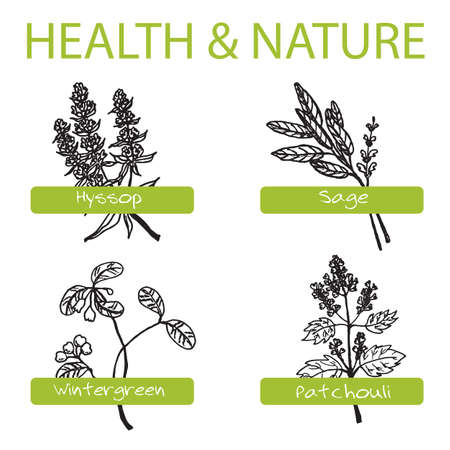 salvia: Handdrawn Set - Health and Nature. Collection of Medicine Herbs. Natural Supplements. Wintergreen, Sage, Hyssop, Patchouli