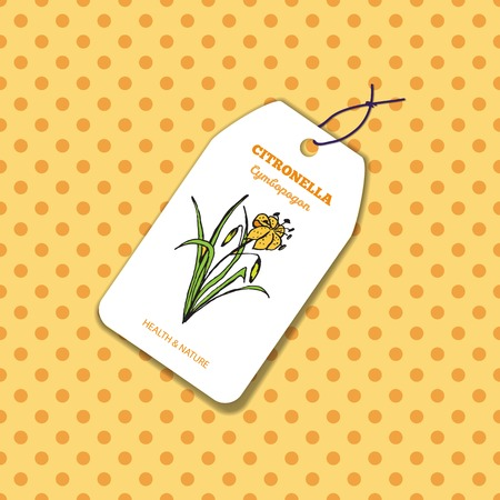 insect repellent: Health and Nature Collection.  Label template with a herb on spotted seamless background. Citronella - Cymbopogon citratus Illustration