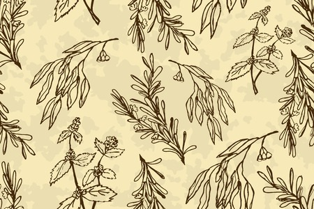 eucalyptus: Handdrawn Illustration - Health and Nature seamless pattern. Collection of Herbs. Eucalyptus, Peppermint, Rosemary Illustration