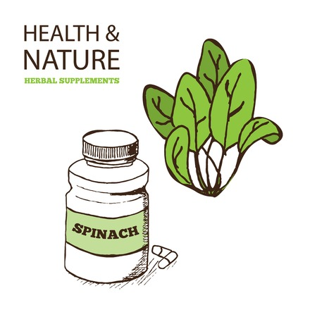 spinach: Health and Nature Supplements Collection.  Spinach - Spinacia oleracea Illustration
