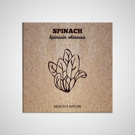 spinach: Health and Nature Supplements Collection. Banner template with a herb on cardboard background. Spinach - Spinacia oleracea