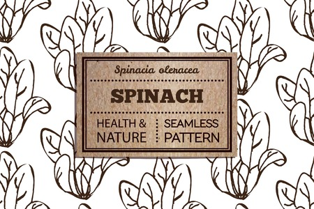 spinat: Gesundheit und Natur Erg�nzungen Collection. Nahtloses Muster mit einer Kr�uter-und Kartonkarte. Spinat - Spinacia oleracea Illustration