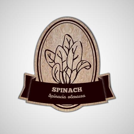 spinat: Gesundheit und Natur Erg�nzungen Collection. Badge-Vorlage mit Kr�uter auf Karton Hintergrund. Spinat - Spinacia oleracea