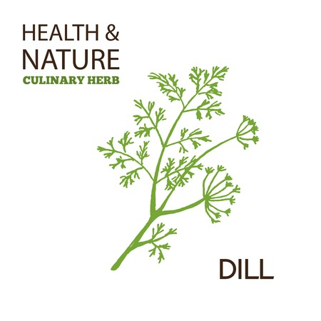 dill: Health and NatureCollection.  Culinary herbs. Dill -  Anethum graveolens