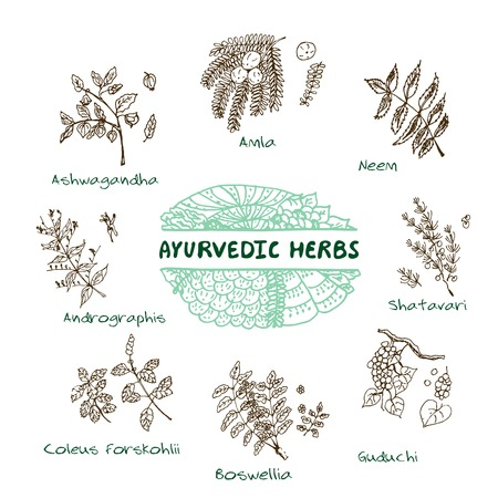 Handdrawn Set - Health and Nature. Collection of Ayurvedic Herbs. Natural Supplements. Coleus forskohlii, Andrographis, Guduchi, Amla, Neem, Boswellia, Shatavari, Ashwagandha Vector