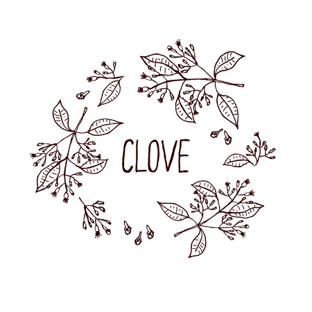 clove: Herbs and Spices Collection - Clove. Handdrawn Wreath. Suitable for ads, signboards, packaging and identity designs Illustration