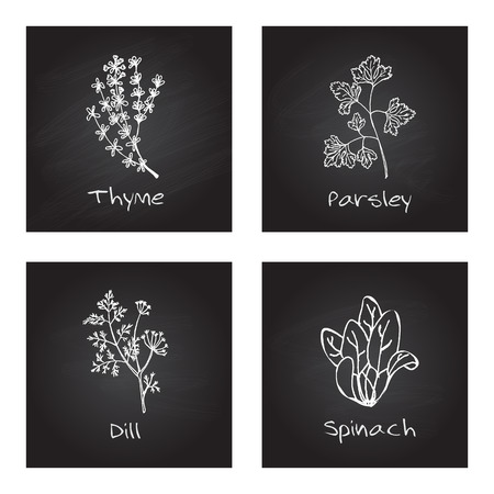 Handdrawn Illustration - Health and Nature Set. Collection of Herbs on Black Chalkboard. Culinary herbs - thyme, parsley, dill, spinach Vector