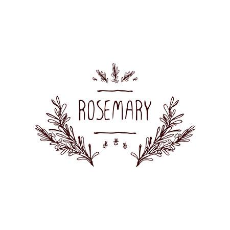 Kräuter und Gewürze Collection - Rosemary. Handdrawn Vignette. Geeignet für Anzeigen, Schilder, Verpackung und Identitätsentwürfe