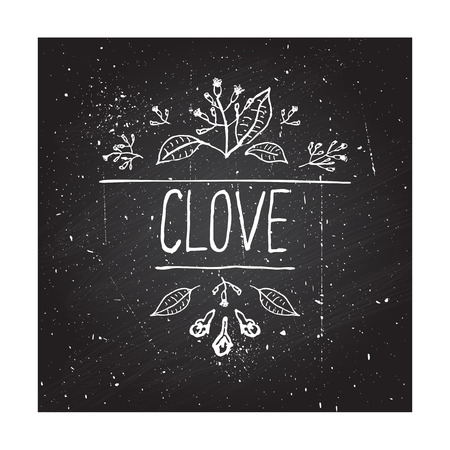 Herbs and Spices Collection - Clove. Hand-sketched typographic element on chalkboard background. Suitable for ads, signboards, packaging and identity designs Vector