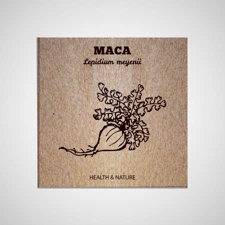Herbs and Spices Collection - Maca.  Hand-sketched herbal element on cardboard background. Suitable for ads, signboards, packaging and identity designs Vector