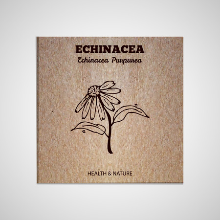 Herbs and Spices Collection - Echinacea .  Hand-sketched herbal element on cardboard background. Suitable for ads, signboards, packaging and identity designs Vector