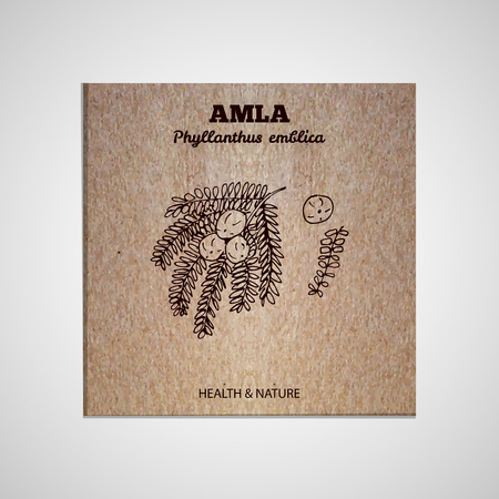 Herbs and Spices Collection - Amla.  Hand-sketched herbal element on cardboard background. Suitable for ads, signboards, packaging and identity designs Vector