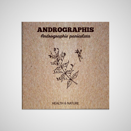 Herbs and Spices Collection - Andrographis.  Hand-sketched herbal element on cardboard background. Suitable for ads, signboards, packaging and identity designs Vector