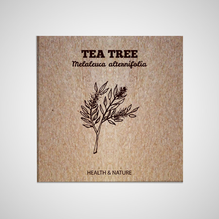package design: Herbs and Spices Collection - Tea tree.  Hand-sketched herbal element on cardboard background. Suitable for ads, signboards, packaging and identity designs Illustration