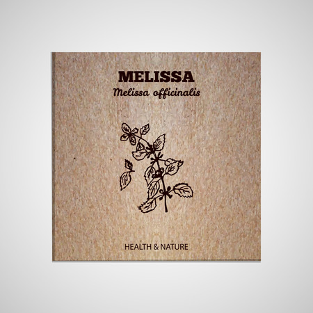 Herbs and Spices Collection - Melissa.  Hand-sketched herbal element on cardboard background. Suitable for ads, signboards, packaging and identity designs Vector