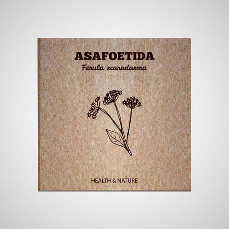 herbal background: Herbs and Spices Collection - Asafoetida.  Hand-sketched herbal element on cardboard background. Suitable for ads, signboards, packaging and identity designs Illustration