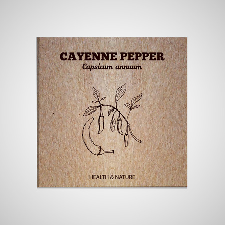 cayenne: Herbs and Spices Collection - Cayenne pepper.  Hand-sketched herbal element on cardboard background. Suitable for ads, signboards, packaging and identity designs