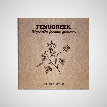 fenugreek: Herbs and Spices Collection - Fenugreek.  Hand-sketched herbal element on cardboard background. Suitable for ads, signboards, packaging and identity designs