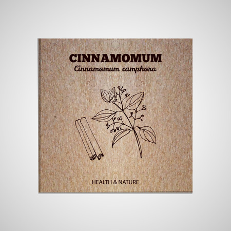 cinnamomum: Herbs and Spices Collection - Cinnamomum.  Hand-sketched herbal element on cardboard background. Suitable for ads, signboards, packaging and identity designs