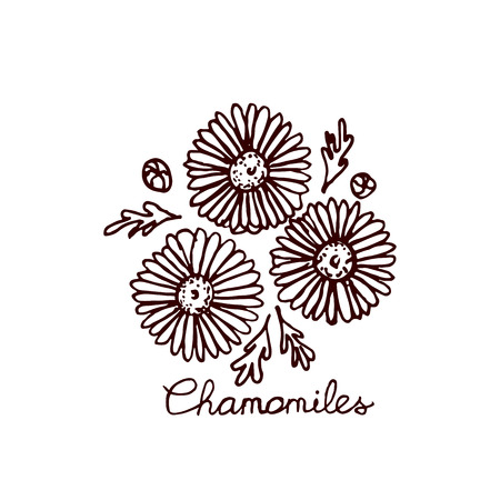 chamomiles: Handsketched bouquet of chamomiles.  Floral label.  Suitable for ads, signboards, identity and wedding designs