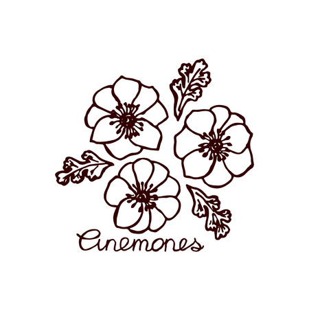 Handsketched bouquet of anemones.  Floral label.  Suitable for ads, signboards, identity and wedding designs Vector