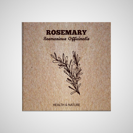 officinalis: Herbs and Spices Collection - Rosemary.  Hand-sketched herbal element on cardboard background. Suitable for ads, signboards, packaging and identity designs Illustration