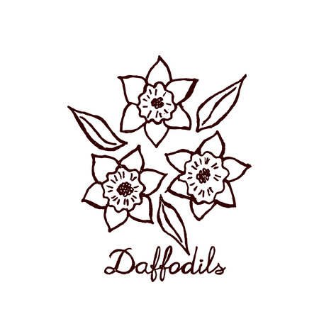 jonquil: Handsketched bouquet of daffodils.  Floral label.  Suitable for ads, signboards, identity and wedding designs