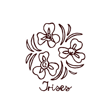 Handsketched bouquet of irises.  Floral label.  Suitable for ads, signboards, identity and wedding designs Illustration