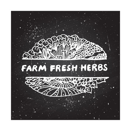 fresh herbs: Farm fresh herbs - zentangle element on chalkboard background
