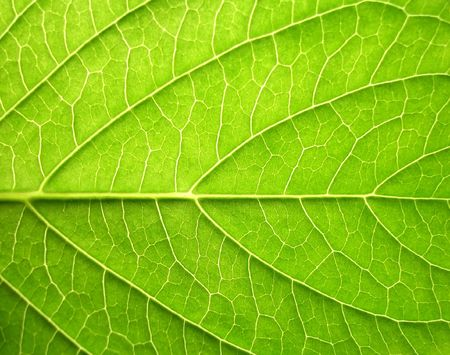Green leaf close-up Stock Photo