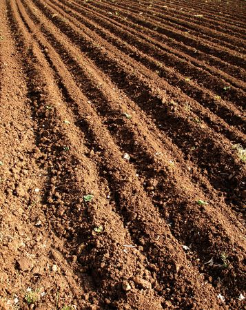 agronomics: Big agricultural field Stock Photo