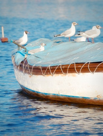 power boat: Seagull standing on top of a small wooden boat