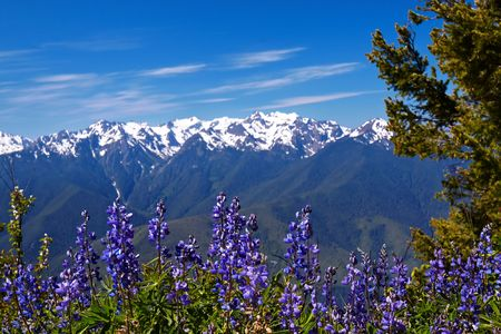 summer olympics: Hurricane Ridge, Olympic National Park, Washington, USA
