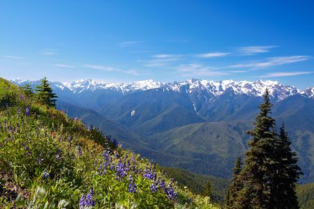 Hurricane Ridge, Olympic National Park, Washington, USA photo
