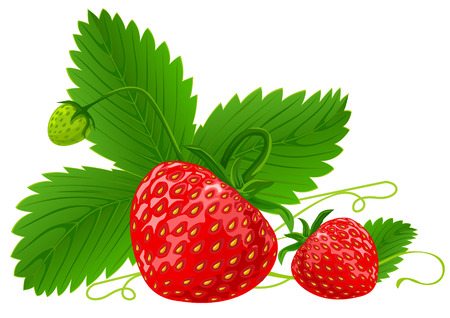 red strawberry fruits with green leafs vector illustration isolated on white background Illustration