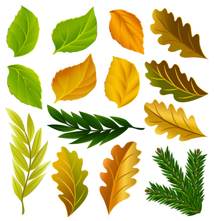 yellow leaves: summer and autumn leaves collection vector illustration