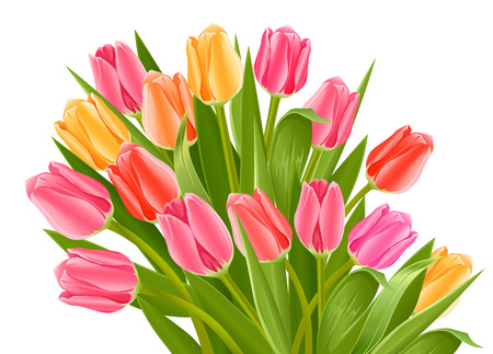 bouquet of tulip flowers - vector illustration isolated on white Vector
