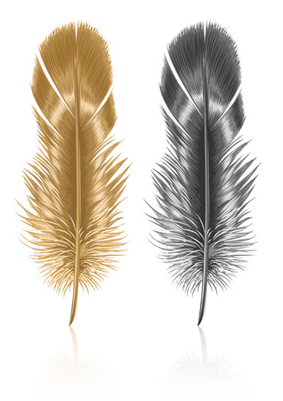 piuma bianca: uccello piuma isolato su sfondo bianco - illustrazione vettoriale