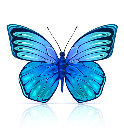 Blue butterfly insect isolated - vector illustration