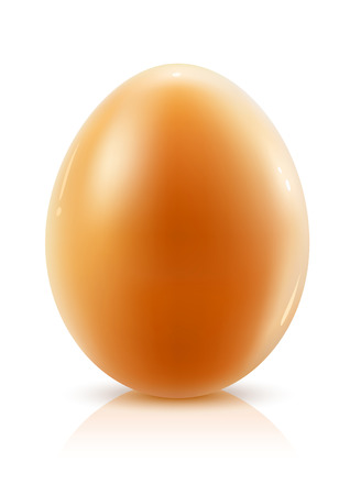 hens egg isolated on white background - vector illustration Vector