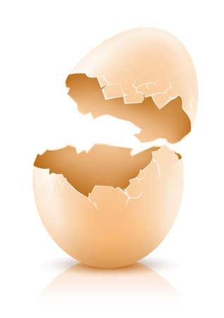 chicken or egg: cracked hens egg isolated on white - vector illustration
