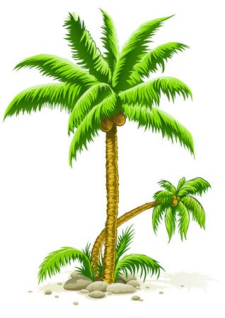palm trees with coconut fruits - vector illustration Vector