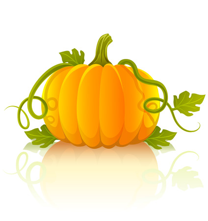 pumpkin leaves: orange pumpkin vegetable with green leaves - vector illustration of object isolated on white background