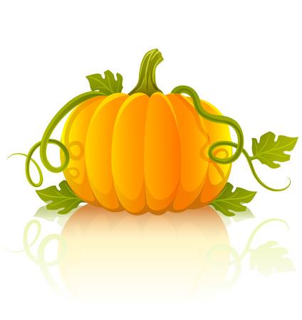 dynia: pomarańczowy warzyw dyni z zielonych liści - ilustracji wektorowych obiektu izolowana na białym tle